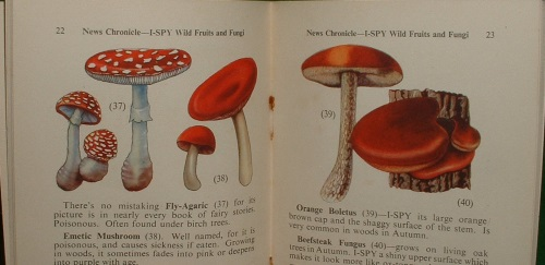 Image for I-SPY WILD FRUITS and FUNGI (COLOUR SERIES)