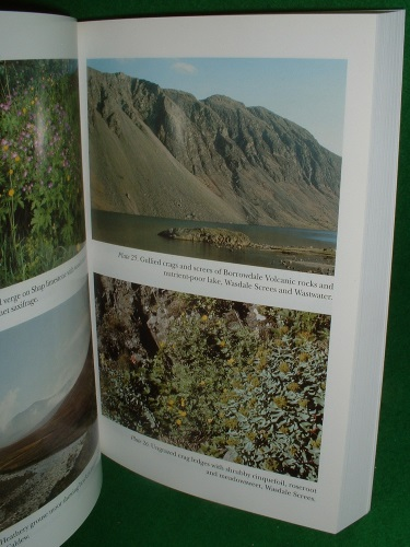 Image for THE NEW NATURALIST LAKELAND THE WILDLIFE OF CUMBRIA