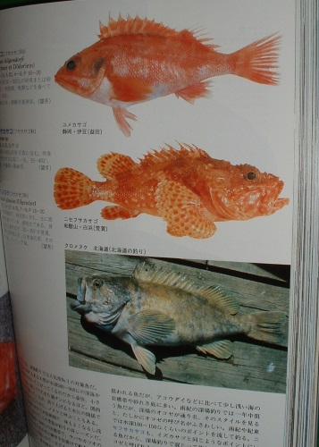 Image for JAPANESE FISH illustrated Hundreds Ciolour plates.